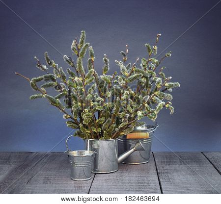 Willow flowering. A small garden iron watering can with branches of flowering willow. The first signs of the awakening of nature. Garden tools and willow flowers on a wooden background. Spring came. Concept. Rustic style.