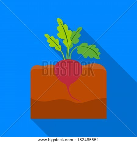 Beet icon flat. Single plant icon from the big farm, garden, agriculture flat.