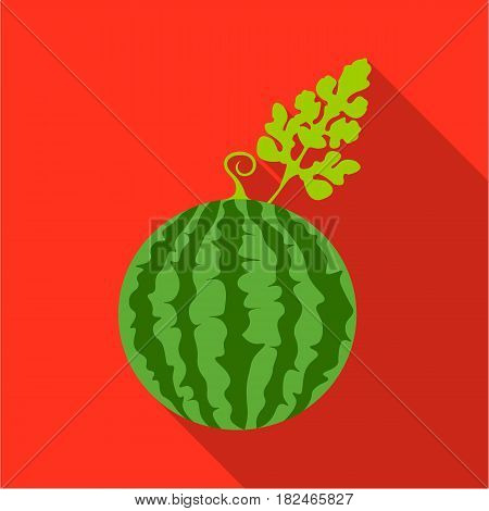 Watermelon icon flat. Single plant icon from the big farm, garden, agriculture flat stock vector