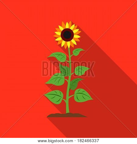 Sunflower icon flat. Single plant icon from the big farm, garden, agriculture flat.