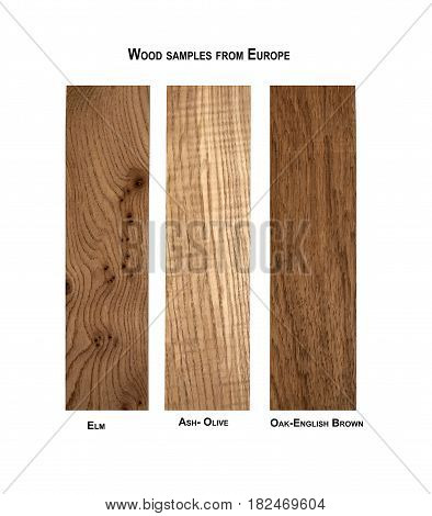 Wood samples from Europe, Elm, Ash-Olive, Oak-English brown