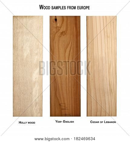 Wood samples from Europe, Holly-Yew and Cedar wood