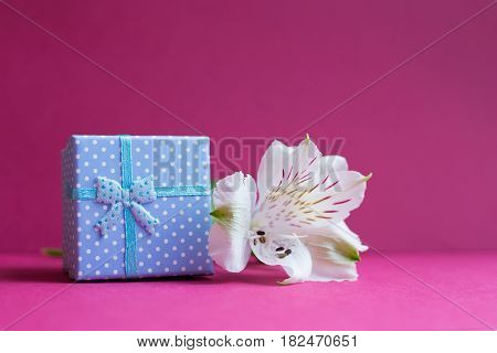 Blue Gift Box With Single Alstroemeria Flower On Crimson Background