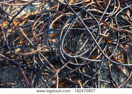 Old rusty and partially burnt metal wire on the landfill. Close-up.