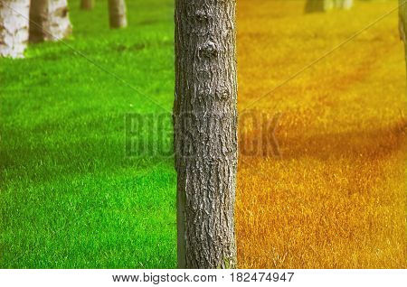 Summer and Autumn on Different Sides of the Tree Trunk
