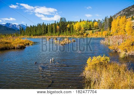 Beautiful Lake Vermilion in Banff National Park. The Canadian province of Alberta, the Rocky Mountains. Perfect sunny day. Concept of ecotourism