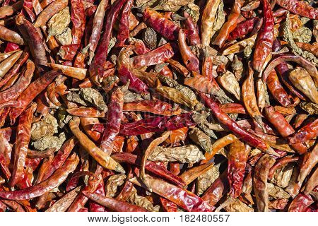 Dried red chilli peppers background in Kathmandu Nepal