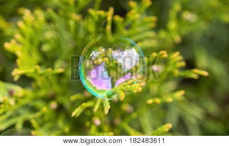 Delicate soap bubble perched gently on an everygreen leaf beautiful circle shining like a small globe full of new ideas and hope