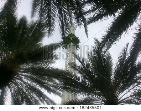 Looking up at palm trees and people riding in a green car up the tall tower of a thrill ride at an amusement park