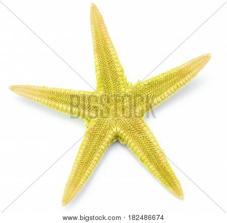 Yellow color seastar, isolated on white background.