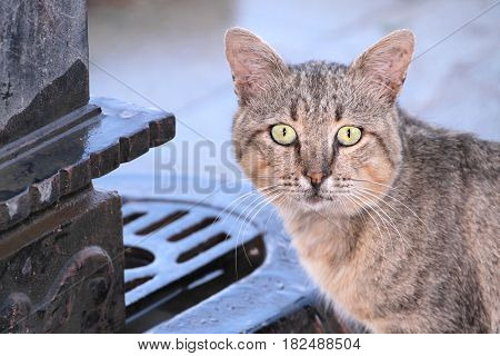 Stray cat in close up image .