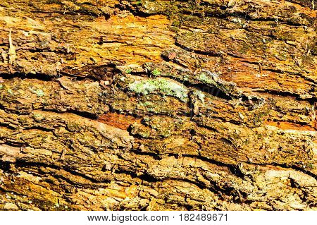 Wood texture background Close-up of old dead wood that is stained and pitted with a rough textured surface