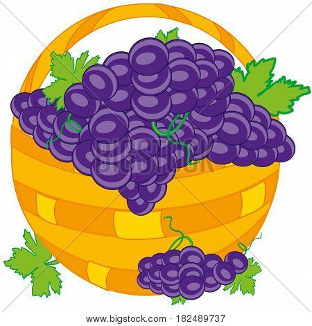 Basket of full ripe grape on white background is insulated