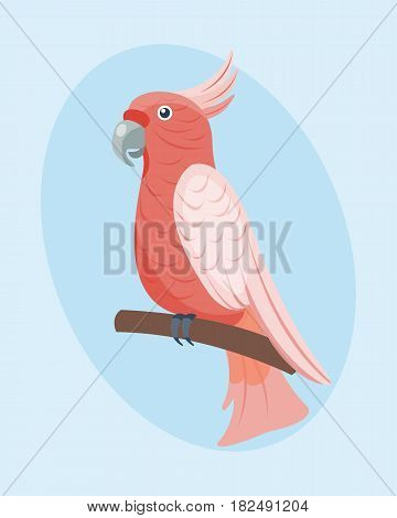 Cartoon tropical parrot wild animal bird vector illustration wildlife flying cute feather zoo color nature vivid. Perch tropics fly fauna jungle pretty colourful macaw.