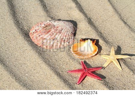 Star fishes and seashell on beach sand