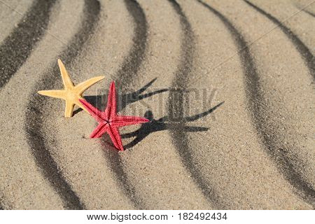 Yellow and red seastar on beach sand