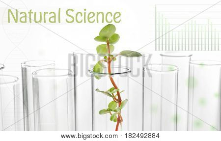 Plant in test tube and text NATURAL SCIENCE on white background