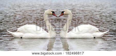 Swan  heart ,  close up image .