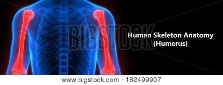 3D Illustration of Human Body Bone Joint Pains Anatomy (Humerus)