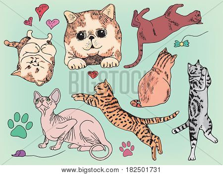 beautiful set of different playing cats and kittens