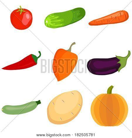 Vegetables. Tomato cucumber pumpkin eggplant pepper zucchini potatoes. Flat design vector illustration vector.
