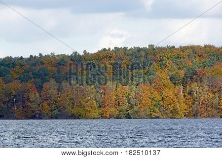 Autumnal forest at the Werbellin lake north of Berlin the German capital