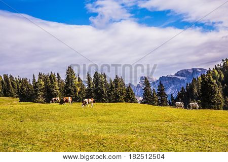 Concept pedestrian and ecotourism. The natural landscape of the Alps di Siusi. Fabulous quiet mountain valley. The  Dolomites - World Natural Heritage