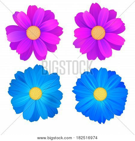 Set of isolated buds of flowers, blue and purple gerbera. Vector colorful flowers on white background. Template for for t-shirt, fashion, prints and other design.