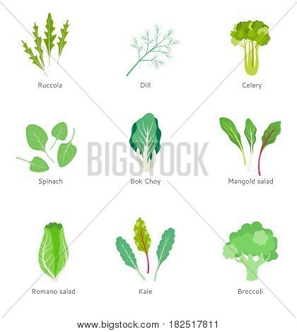 Set of green lettuce leaves in a flat style on a white background. Healthy ingredients for vegetable salad. Vegetarian food.