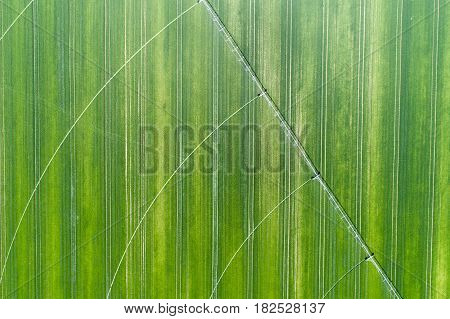 Irrigation System In Wheat Field