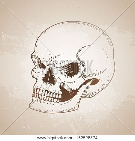 Graphic skull with fearful smile. Vector tattoo art isolated on vintage background