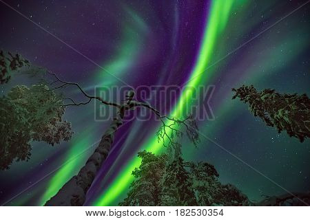 Beautiful Northern lights over the head in Lapland