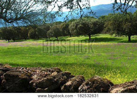 A green field with a stone wall and distant mountains