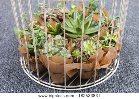 Closeup of a white birdcage decoration with succulent plants