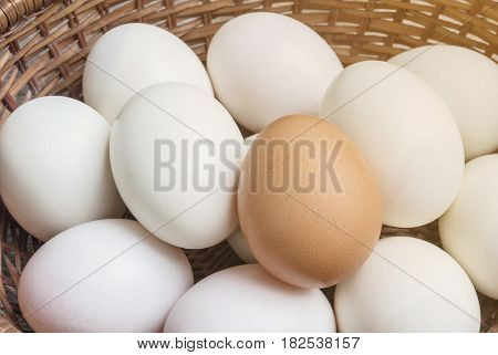 Closeup brown chicken egg on pile of white duck egg on wood basket background