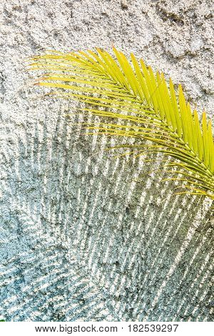 Palm leaf in harsh midday sunlight casting a shadow onto a white textured wall with a blue tinge. Kathmandu Nepal.