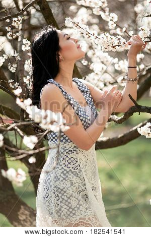 Young woman in blooming apricot garden. She looks at flowering branches of apricot tree.