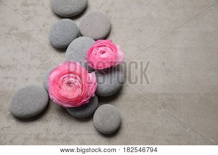 Two pink ranunculus flower and stone on gray background