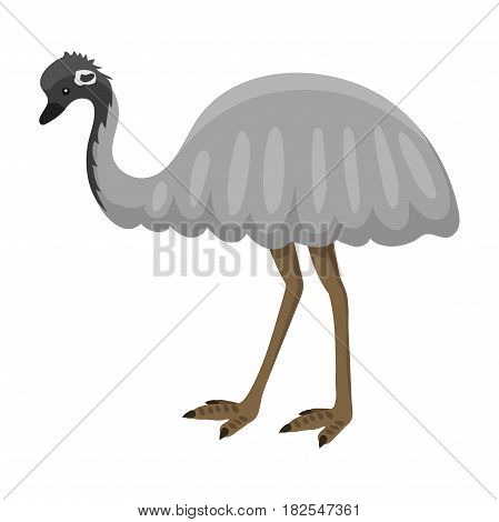Australia wild ostrich animal cartoon popular nature character flat style and australian bird emu native forest vector illustration. Natural little young wildlife funny portrait.