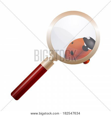Magnifying glass, ladybird, education concept. Scientific biology study nature