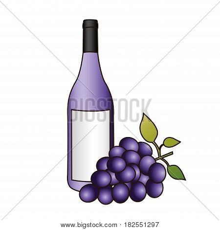 colorful silhouette with bottle of purple wine and bunch of grapes and delineated vector illustration