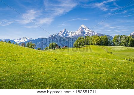 Idyllic Landscape In The Alps With Fresh Green Meadows In Summer