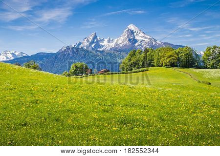 Idyllic Landscape In The Alps With Fresh Green Meadows And Blooming Flowers And Snowcapped Mountain
