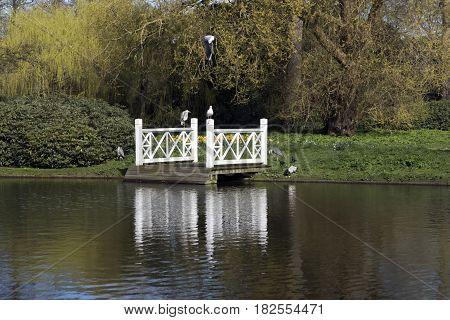 Small white bridge in Frederiksberg Garden and herons and seagull Copenhagen Denmark.