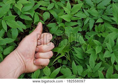 Gesture of approval against the background of greenery