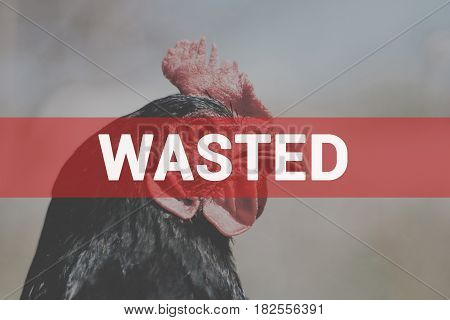 Portrait of a beautiful charismatic chicken of black color in profile in a natural environment with a beautiful soft bokeh, close-up shot of a macro