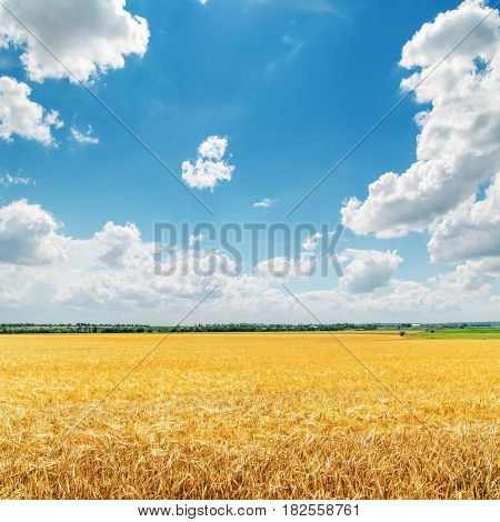 clouds in blue sky over golden field with crop