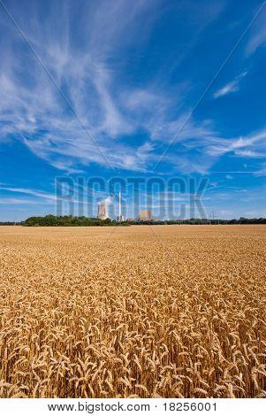 Grainfield und macht Pflanze