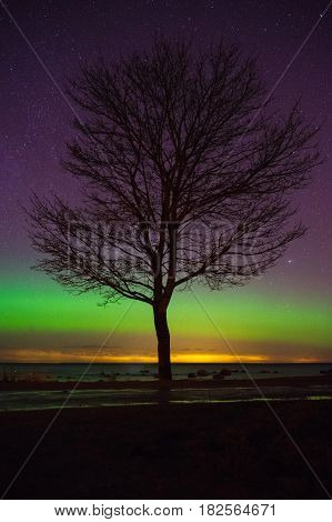 Alone tree silhouette at seacoast against starry sky with some northern lights