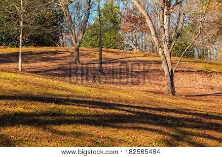 Hills and bare trees in the Lullwater Park in sunny autumn day Atlanta USA